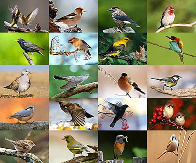 bird-pictures.jpg